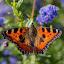 Jean-Michel NAERT (Owner)