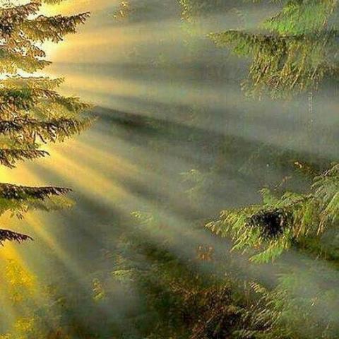Damaris Valdez