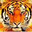 Tiger_Skillz