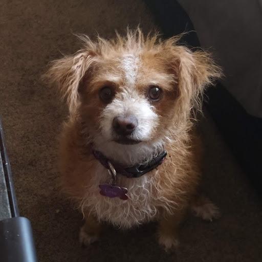 BJH Design