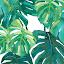 sweettoo plant