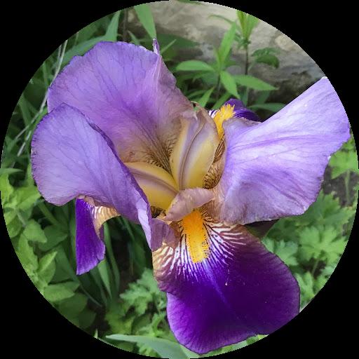 Image du profil de p lilou