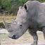 EO Rhino