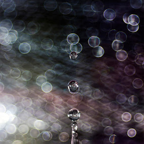 Dreaming drop by Lara Zanarini - Abstract Water Drops & Splashes ( lights, macro, colors lara, drop, zanarini )