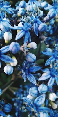 figlia dei fiori di stephaniefrabons