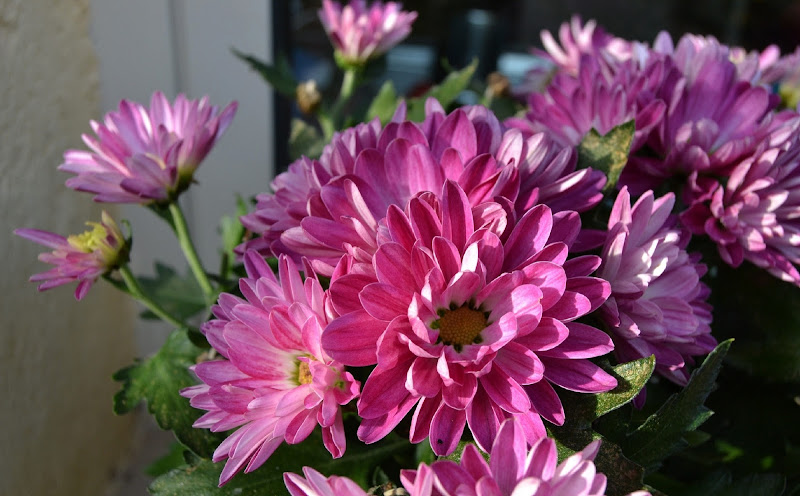 fiorellini autunnali di giride