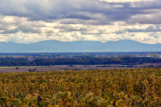 Photo: The vineyards of Alsace