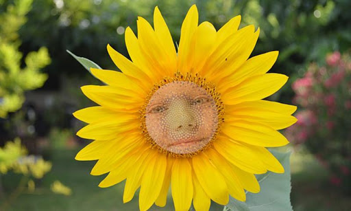 Sunflower Photo Face effects