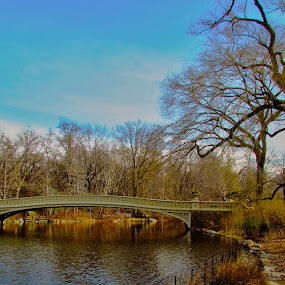 Central Park by Fabio Ferraro - City,  Street & Park  City Parks ( park, manhattan, new york, ny, central park )