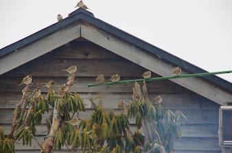 窓の外は雀がいっぱい