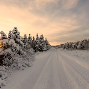 Winter road by Ruslan Stepanov - Landscapes Forests ( iceland, sunset, snow, trees, road, sun,  )