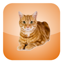 Cat Screen Cleaner icon