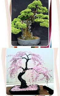 Bonsai Tree Decor - náhled