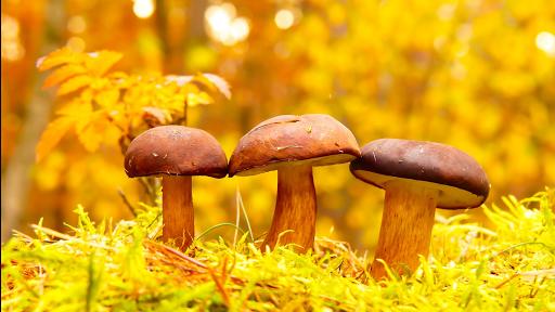 31/12/19 champignons  paniers hebdo de Béatrice au tournesol bio magasin diététique en aArdèche Beauchastel