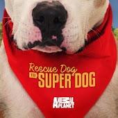 Rescue Dog to Super Dog