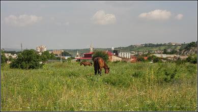 Photo: Turda - caluti  in zona strazii Fabricii - 2019.06.22