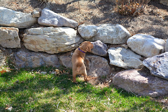 Photo: I think she wants to be a rock climber
