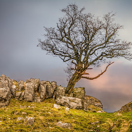 All Alone by Darrell Evans - Nature Up Close Trees & Bushes ( countryside, clouds, hills, sky, nature, tree, grass, green, outdoor, stone, landscape )