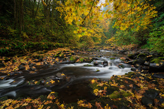 Photo: Autumn is upon us and I couldn't be happier. Okay, maybe I could be... let's hope father Winter nails us with some big snow! That'd be awesome.  This is a scene from the stream that feeds the Cedar Creek Grist Mill near Woodland, WA from a couple weeks ago.  #sonyalpha #autumncolors  #landscapephotography  #fallcolors