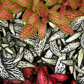 by Megi Šajn - Nature Up Close Other plants ( nature, plants, up close, natural light, colours )