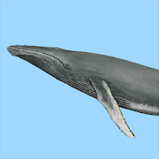 App Icon for Dolphins & Whales Sightings App in Czech Republic Google Play Store