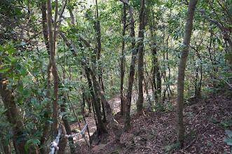 Photo: 下山往二坑口方向走路程較短,很快就走出主線步道