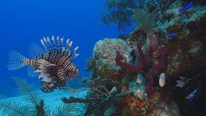 Maldives: Paradise Shrinking thumbnail