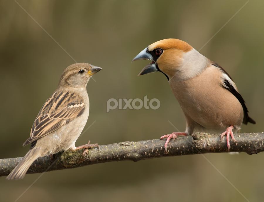 by Dragomir Taborin - Animals Birds