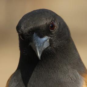 by Yash Savla - Animals Birds