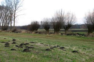 Photo: Wierzby na polu w Sokolnikach