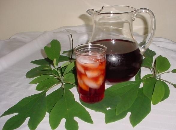 Sassafras Tea Recipe