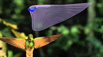 David Attenborough's Conquest of the Skies: Triumph