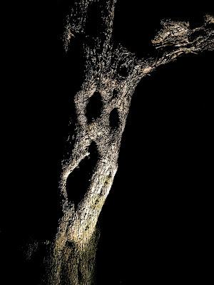 e 'l tronco suo gridò....Inferno canto XIII, 33 di VIC61