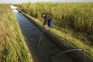 Irrigating sugar cane fields. Kafue Flats, Zambia    	© WWF / Martin HARVEY