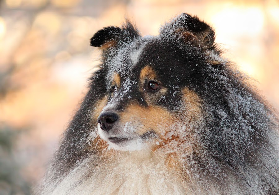 by Jane Bjerkli - Animals - Dogs Portraits (  )