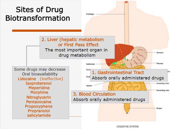 liver thc metabolism