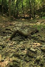 Photo: A vadregényes szurdokvölgyet a Telekes-patak hozta létre, amely azonban nyáron általában száraz