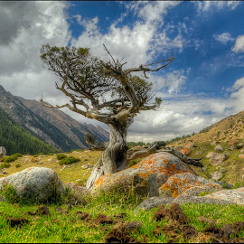 mountain loner by Petr Klingr - Landscapes Travel ( mountains, hdri, rocks, hdr, tree, clouds,  )