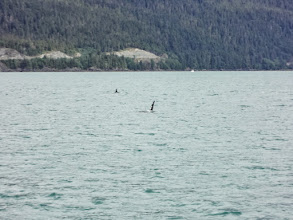 Photo: The orcas started coming closer