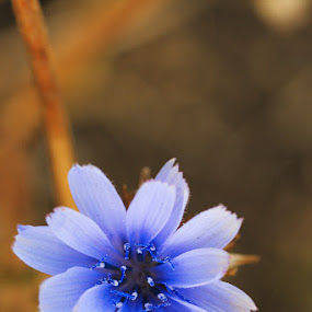 by Ioan-Dan Petringel - Nature Up Close Flowers - 2011-2013