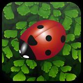 Crawl of the Ladybug
