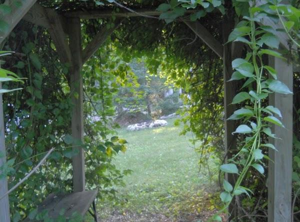 Green Pesticides For Your Garden Recipe