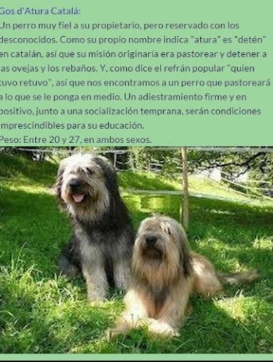 Atlas Canino: Razas de Perros