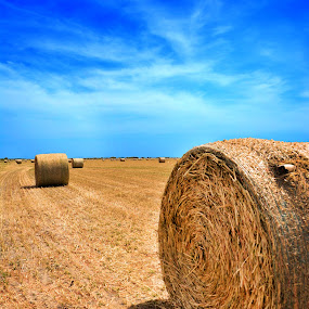 Hay, There by Chandal Chenier - Landscapes Prairies, Meadows & Fields ( hay, field, texas )