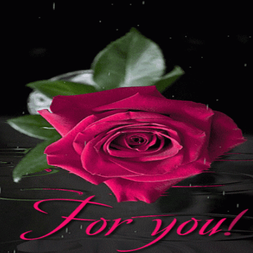 Pink Rainy Rose LWP