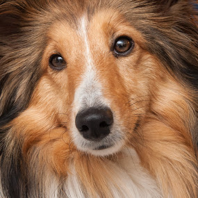 by Rick W - Animals - Dogs Portraits