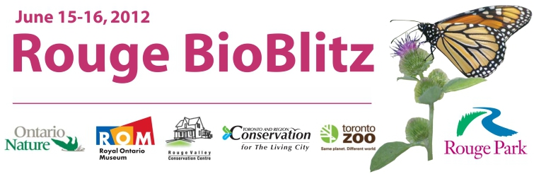 Rouge BioBlitz, June 15 - 16, 2012