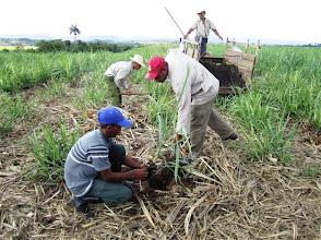 Photo: Transplanting. Sustainable Sugarcane Initiative (Sistema de Caña de Azúcar Sostenible - SiCAS) 2012 [Photo by Rena Perez]