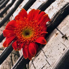 *left behind,.... by Re Rahnavarda - Nature Up Close Flowers - 2011-2013