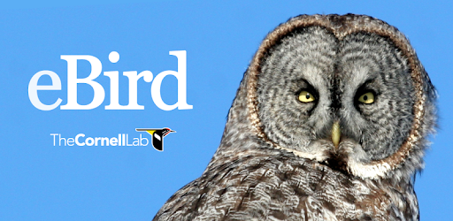 eBird by Cornell Lab - Apps on Google Play